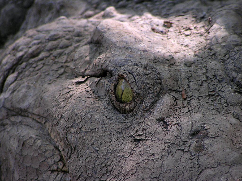 051227-marc-wiese-Kopie-von-namibia-1333-2005-Namibia-Tiere.jpg